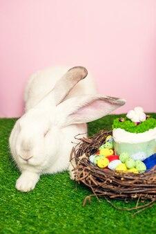 Ein schönes flauschiges kaninchen liegt im grünen gras neben bemalten eiern und osterkuchen. osterferienkonzept. weihnachtskarte