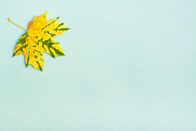 Ein schönes gelbgrün gesprenkeltes gefallenes ahornblatt auf einer pappe