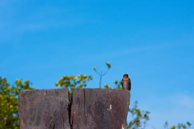 Ein schwalbenvogel auf blauem himmel.