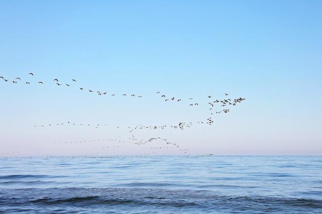 Ein schwarm zugvögel am himmel über dem meer. saisonale migration von vögeln. weicher selektiver fokus.