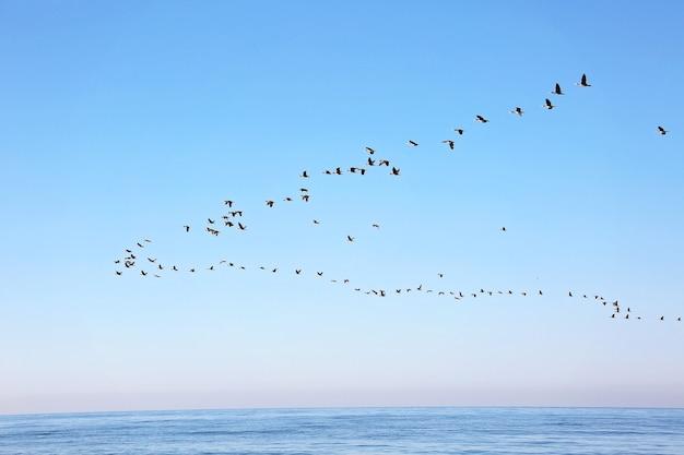 Ein schwarm zugvögel am himmel über dem meer. saisonale wanderung von vögeln. weicher selektiver fokus.
