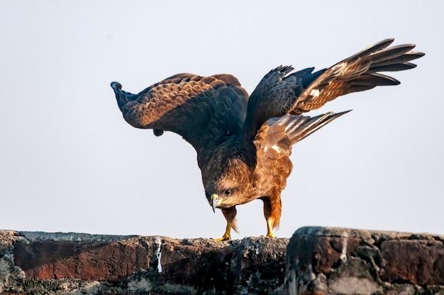 Ein schwarzer drachen sitzt an einer wand und flattert mit den flügeln