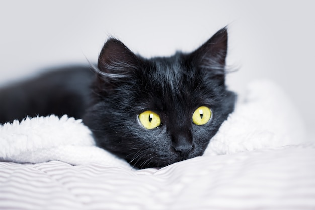 Ein schwarzes kätzchen liegt auf der couch horizontal.