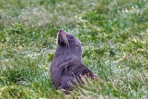 Ein seebär ruht im gras