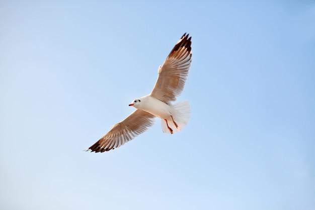 Ein seemöwenfliegen im himmel
