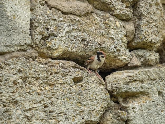 Ein spatz schaut aus seinem haus in eine steinmauer