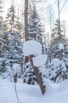 Ein spaziergang durch den winterwald. schöne winterlandschaft.
