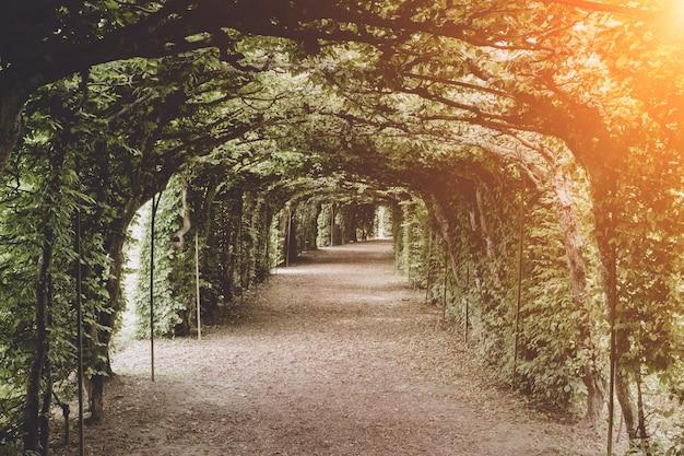 Ein spaziergang im nationalpark, um die blätter, blumen und grünen bäume herum. sommerlandschaftshintergrund