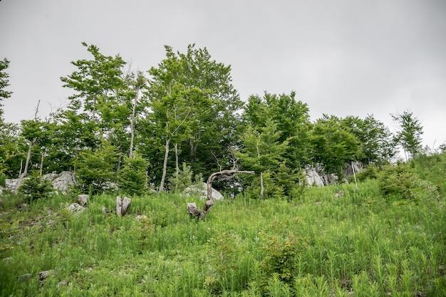Ein spaziergang in den wäldern und bergen bei bewölktem wetter.