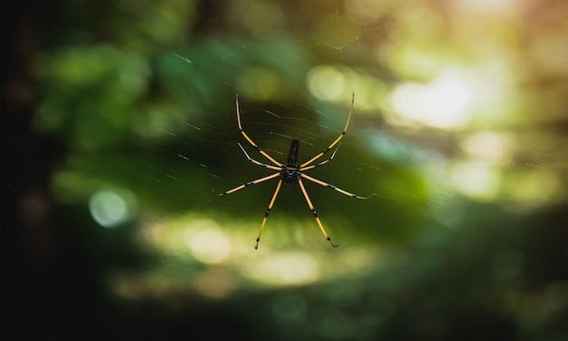 Ein spinnennetz im naturhintergrund. im allgemeinen gedacht, um seine beute zu fangen.