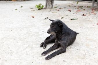 Ein Straßenhund
