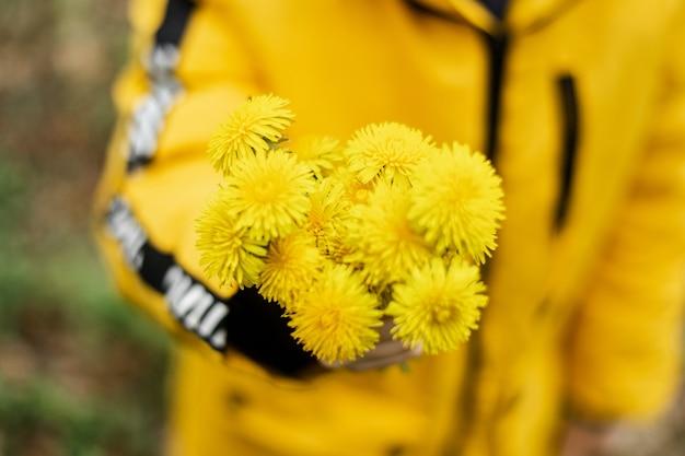 Ein strauß gelber löwenzahn in der hand eines kindes.