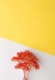 Ein strauß roter kalanchoes-blumen auf einem weißgelben hintergrund frühlings-stillleben-konzept