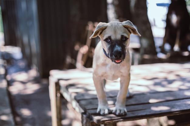 Ein streunender hund, allein das leben wartet auf nahrung. verlassener obdachloser streunender hund liegt auf der straße. kleiner trauriger verlassener hund auf fußweg.
