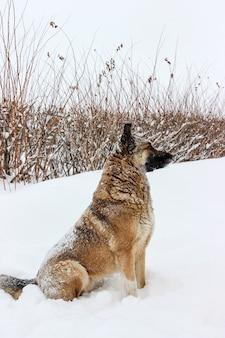 Ein streunender hund im schnee