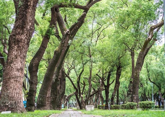 Ein stuhl im park, entspannend, banyan-bäume an der dunhua road, taipeh. sich ruhig fühlen