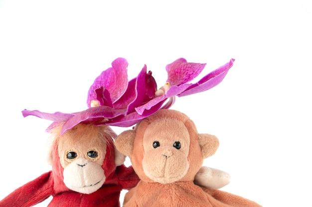 Ein süßes affenpaar sitzt mit frischen orchideenblüten