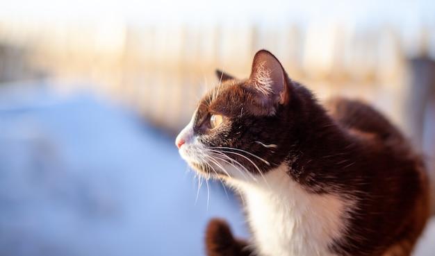 Ein süßes flauschiges und braunes kätzchen sitzt im winter auf einem holzzaun