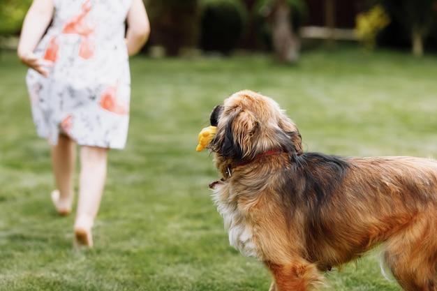 Ein süßes kleines mädchen spielt mit ihrem hund draußen auf gras zu hause