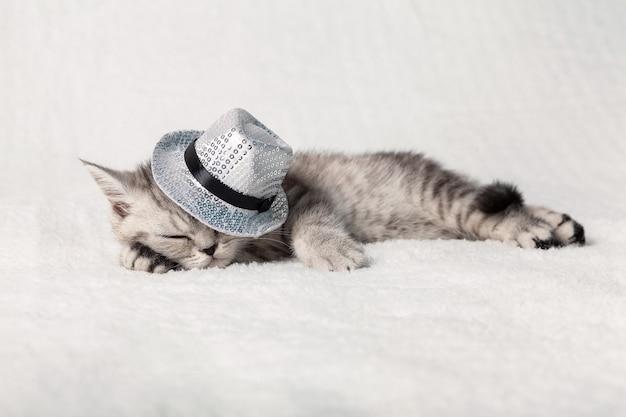 Ein süßes schottisches kätzchen schläft auf einem weißen plaid in einem hut mit silbernen pailletten