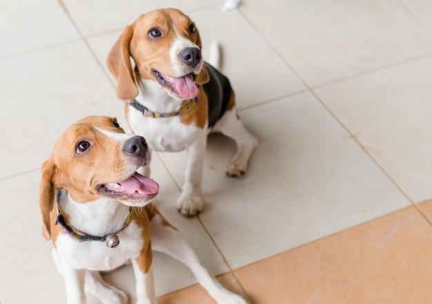 Ein süßes zwei hunde