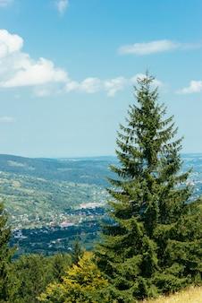 Ein tannenbaum mit blick auf die berglandschaft