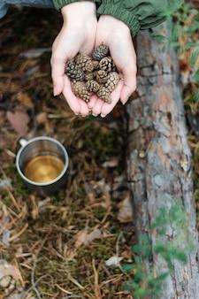 Ein tannenzapfen liegt in ihrer handfläche. die atmosphäre des waldes. sammle tannenzapfen im wald.