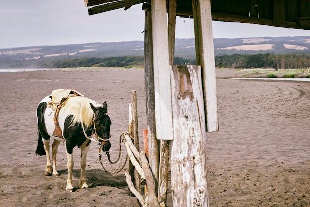 Ein touristenpferd, das müde ist, allein unter starkem sonnenlicht während des sommers mit wüsten- oder trockenstrand zu stehen