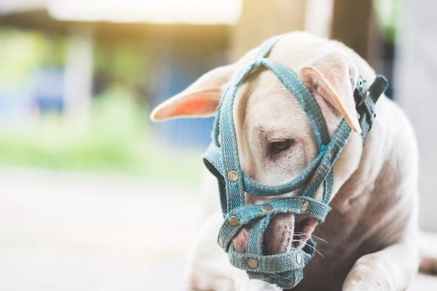 Ein trauriger hund mit einer mündung, die auf dem boden nahe bei der tür des hauses im freien liegt