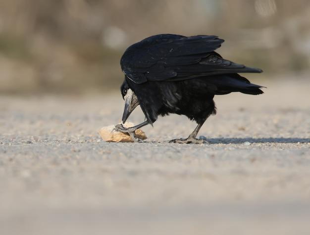 Ein turmfalke hat ein stück brot auf dem asphalt gefunden und hält es mit einer pfote fest