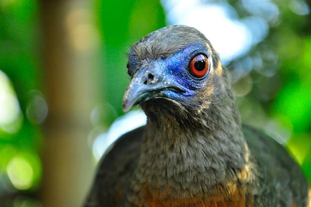 Ein unbekannter vogel