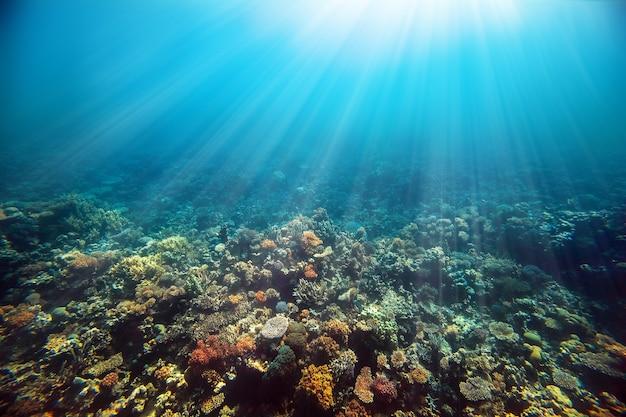 Ein unterwasserkorallenriff am roten meer