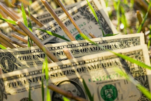 Ein us-dollar in den weizenstoppeln, nahaufnahme auf dem feld nach der ernte des getreides