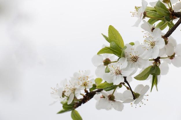 Ein verwitterter apfelbaum, blumen in einem garten