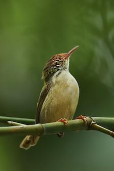 Ein vogel auf einem ast