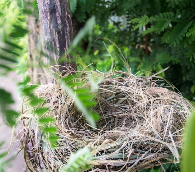 Ein vogelnest ruht auf dem baum in der natur