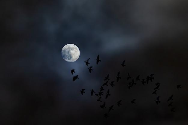 Ein vogelschwarm fliegt nachts dem mond entgegen