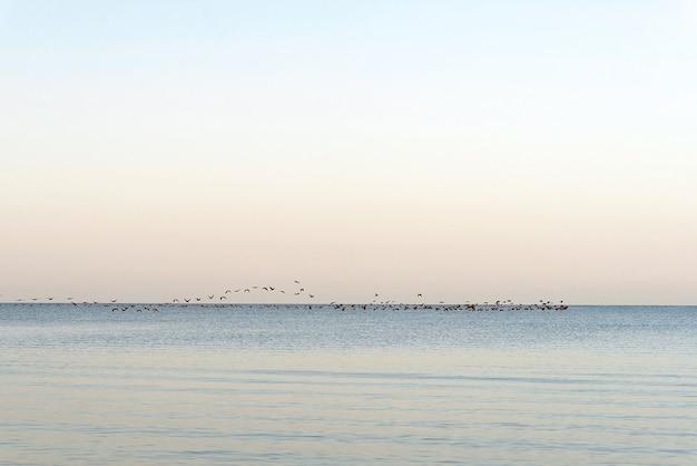 Ein vogelschwarm über dem meer. saisonale migration von vögeln in wärmere regionen.