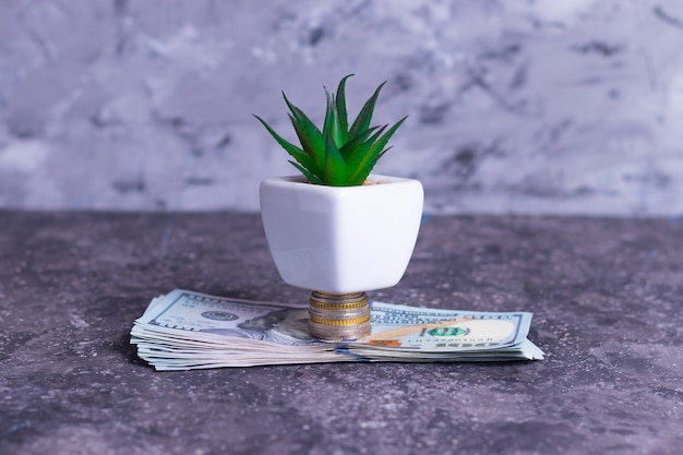 Ein wachsender geldbaum aus banknoten und geldmünzen zur unterstützung kleiner unternehmen