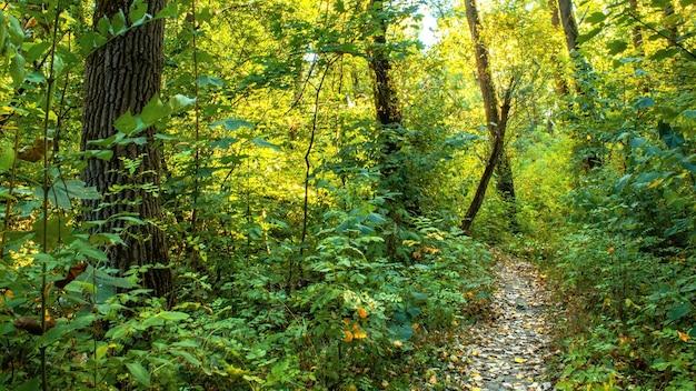 Ein wald mit einem weg durch die grünen bäume und büsche, abgefallene blätter auf dem boden, chisinau, moldawien