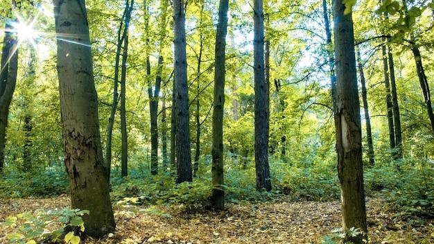 Ein wald mit vielen grünen und gelben hohen bäumen und büschen, abgefallenen blättern auf dem boden, durchscheinender sonne, chisinau, moldawien