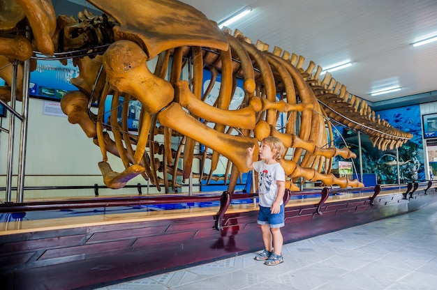 Ein walskelett im national oceanographic museum