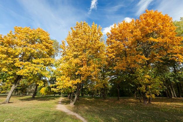 Ein weg auf dem rasen durch den park in der herbstsaison, das laub auf den laubbäumen ändert seine farbe und fällt bald, die landschaft mit dem phänomen natur in der stadt