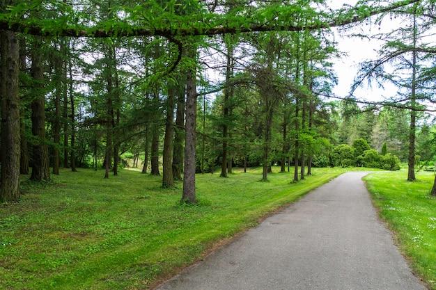 Ein weg, der an einem sonnigen tag durch den park führt. Premium Fotos