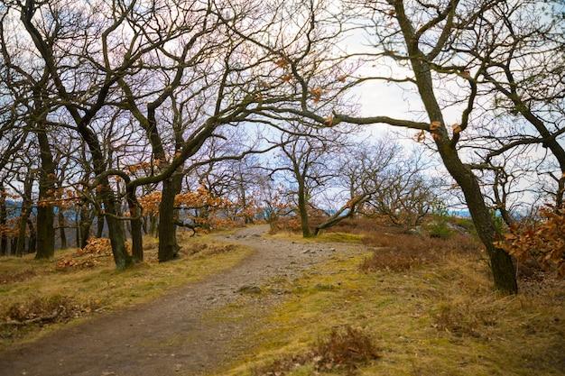 Ein weg durch die mit moos und steinen bedeckten bäume