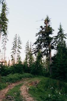 Ein weg im kiefernwald irgendwo in den bergen