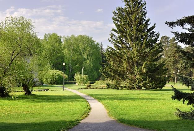 Ein weg im landschaftsgarten hohe tannen frisches laub von bäumen gras auf dem rasen