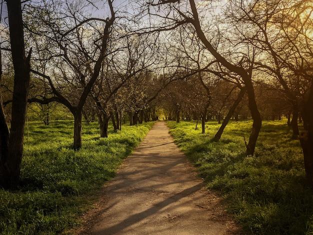 Ein weg im park, bäume an den seiten. schöne untergehende sonne im rahmen.