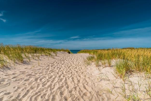 Ein weg im sand führt im sommer zur ostsee