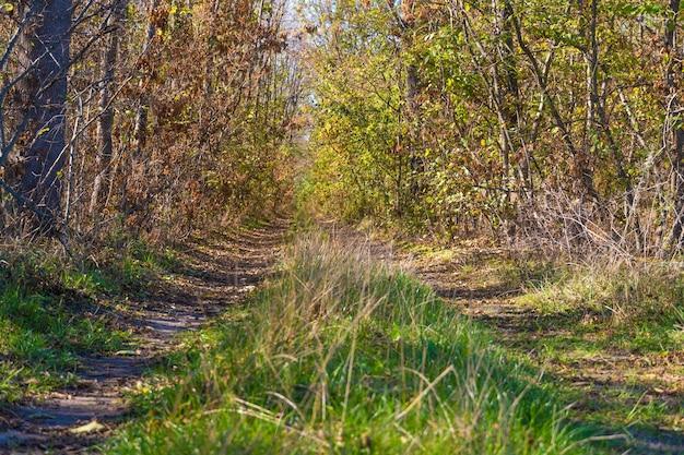 Ein weg im wald. herbstlandschaft